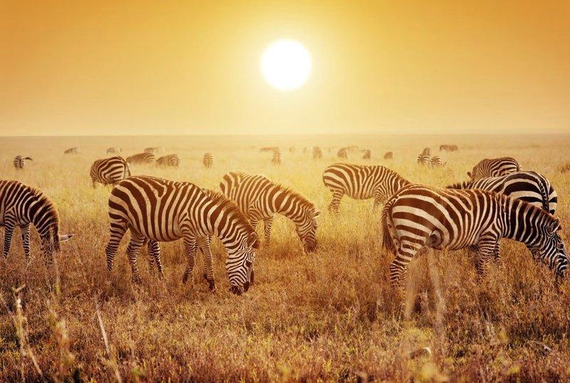 tanzania: onze populairste reisbestemming