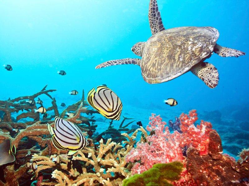 automne exotique Maldives