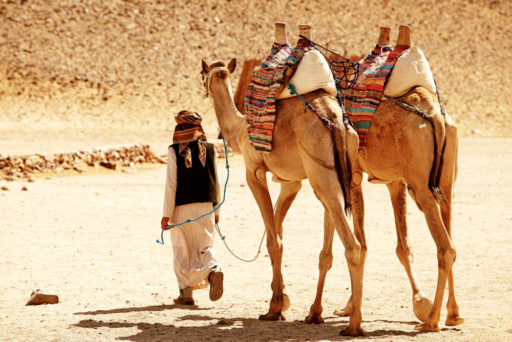 Kamelentocht Tunesië