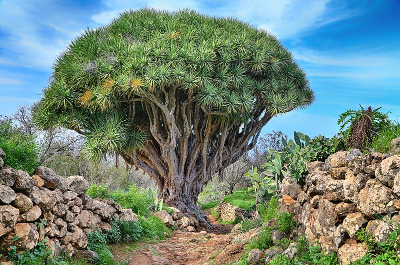 Natuur Canarische Eilanden