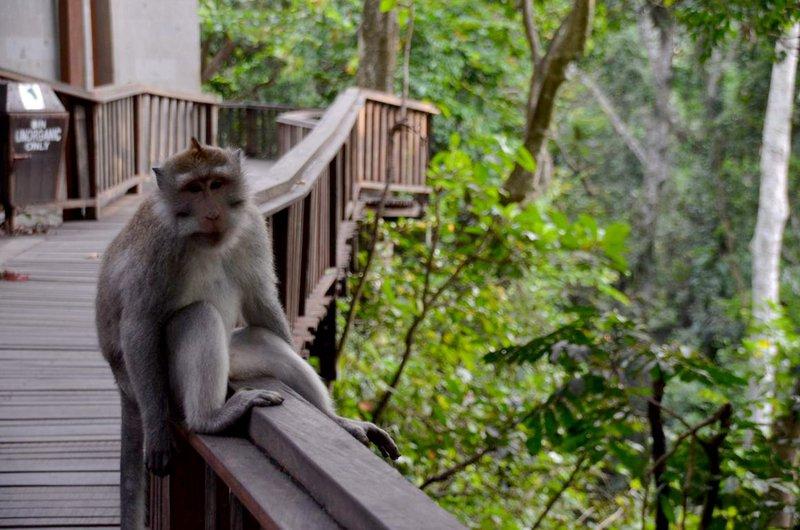5 expériences uniques à vivre à Bali