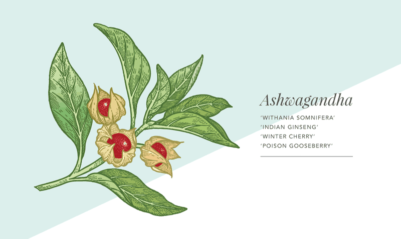 Ashwagandha Benefits for Men: Fertility, Stress and More