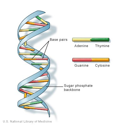 DNA structure nutrigenomics
