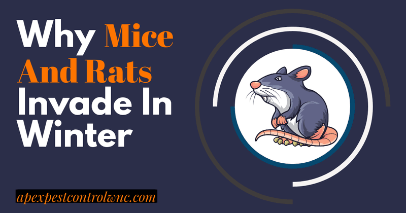 mice and rats