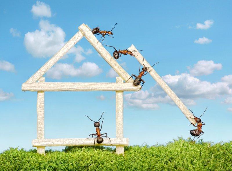 pest problems - ants