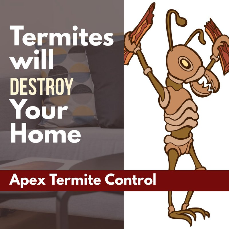 Why You Need Termite Control 2