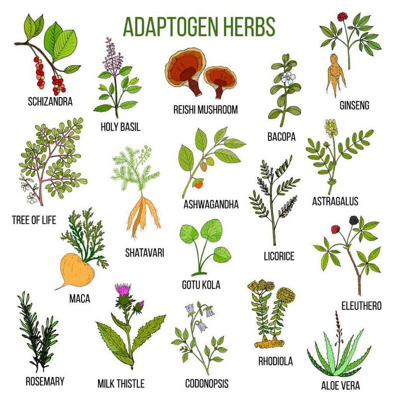 Cartoon drawings of popular adaptogen herbs