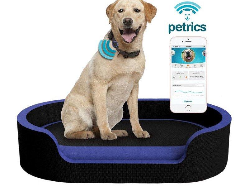 Dog on Petrics Smart Pet Bed