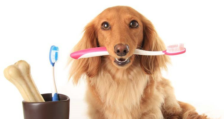 toothbrush-for-your-dog