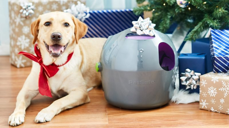 Best Gifts for Pets- Happy Dog