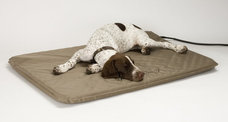 Best Gifts for Pets- Bed for Pets